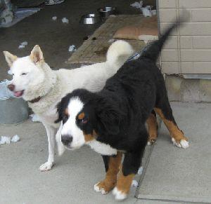IMG_6712飼い犬