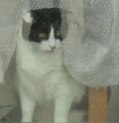 IMG_6717飼い猫