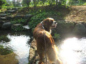 IMG_6926公園池