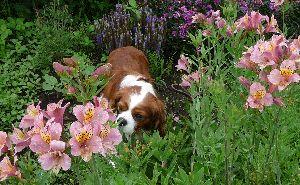 2008_0714画像0013花壇