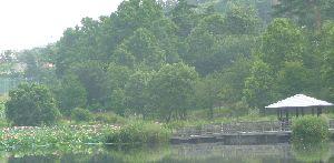 2008_0722画像0006池
