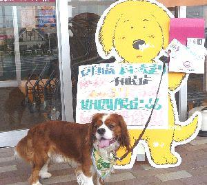 2008_0805画像0002犬看板