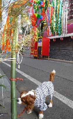 2008_0807画像0002笹飾り