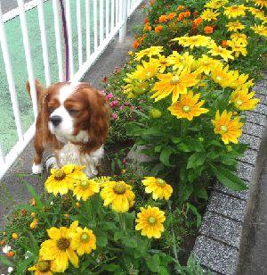 2008_0815画像0001花壇
