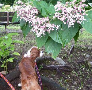 2008_0817画像0007花の下
