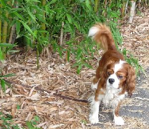 2008_0821画像0002竹林