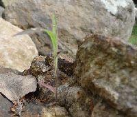 2008_0826画像0007岩に草