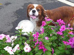 2008_0831画像0002花壇1