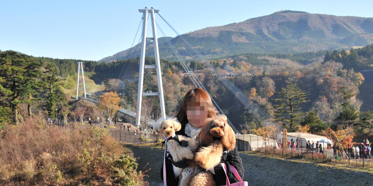 06九重夢吊り橋06