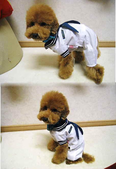 海上自衛犬?