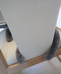 椅子に抱きつく猫