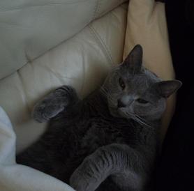 添い寝猫2