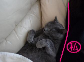 添い寝猫3