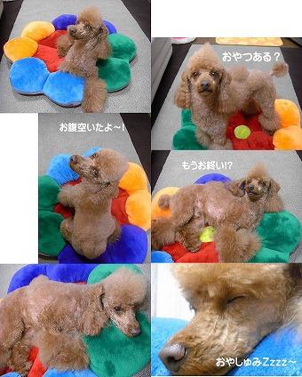 s-nikki6_20081010134945.jpg