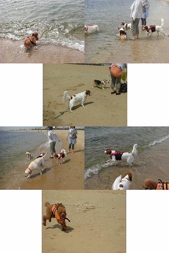 s-nikki_20081010134831.jpg