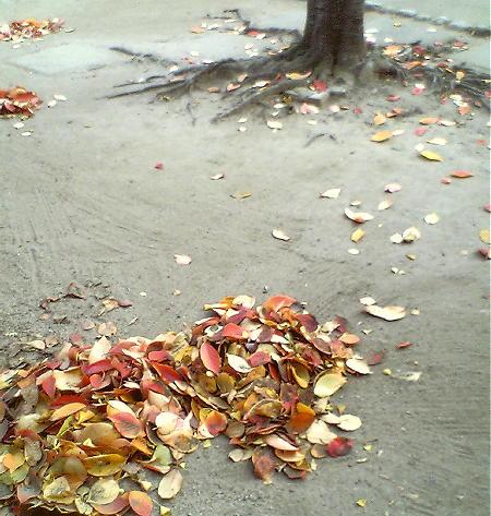 赤や黄色の桜の葉っぱ♪