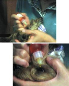 白内障予防の目薬