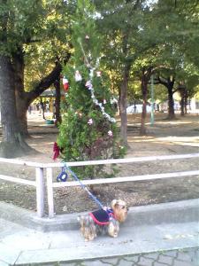 公園にXmasツリー
