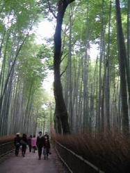 竹林のトンネル