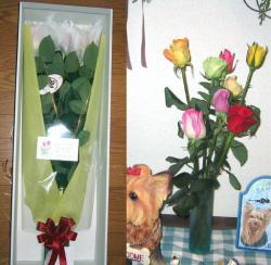 薔薇をプレゼントしていただきました