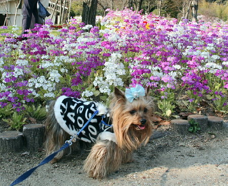 お花が綺麗~