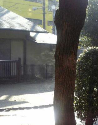木から上がる湯気