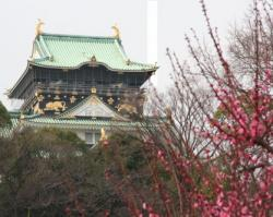 梅なめの大阪城