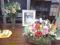 ももちゃんの祭壇にお花