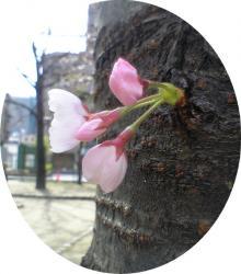 こんなに可愛い花と蕾が…