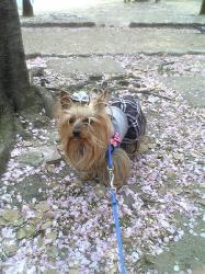 花びらの絨毯②
