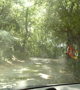 お墓への山道