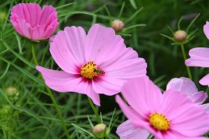 蜂がいる…