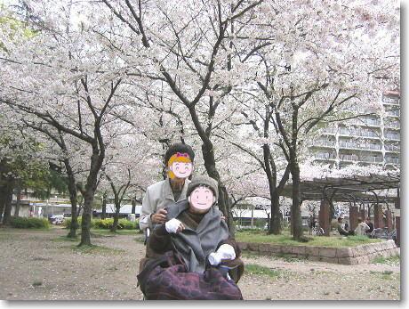 chichi-sakura.jpg