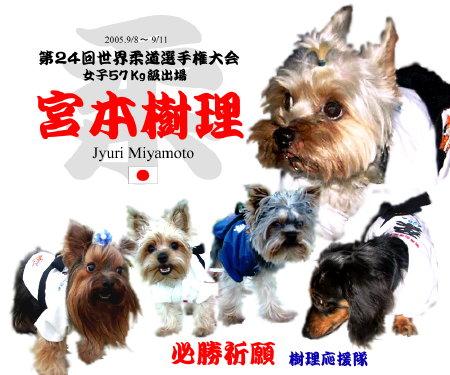 宮本樹理選手犬応援隊-元画像