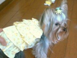 ビスの桃ちゃんにいただいたドレス