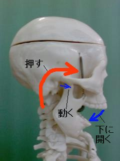 正常な顎関節の開け方の方法