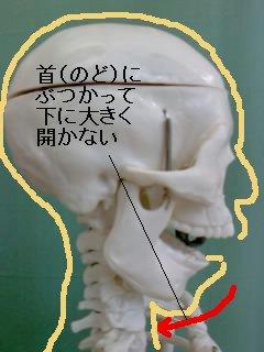 首(のど)にぶつかる顎関節