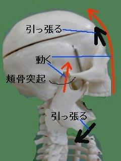 頬骨突起を乗り越える開け方