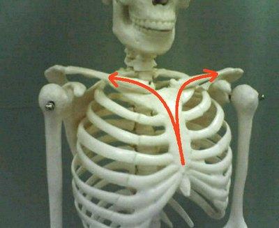 胸骨が鎖骨を押し上げる