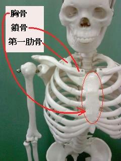 胸骨の場所
