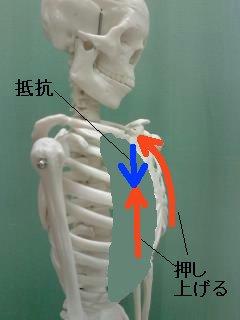 胸骨を押し上げる