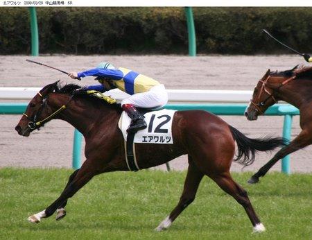 馬の肩甲骨1