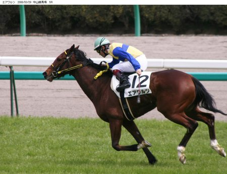 馬の肩甲骨2