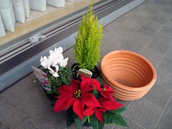 クリスマスの寄せ植え1