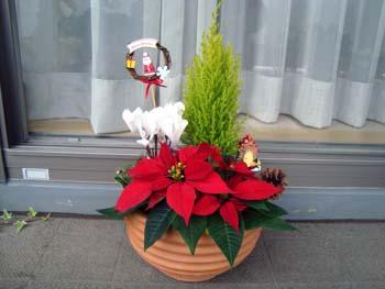 クリスマスの寄せ植え2
