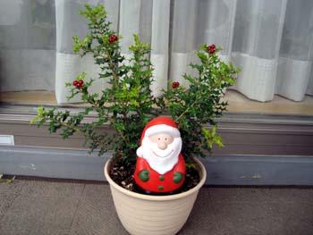 クリスマスの寄せ植え3