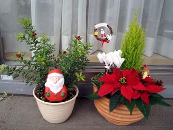 クリスマスの寄せ植え4