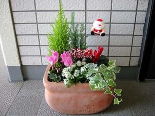 クリスマスの寄せ植え5