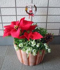 クリスマスの寄せ植え6
