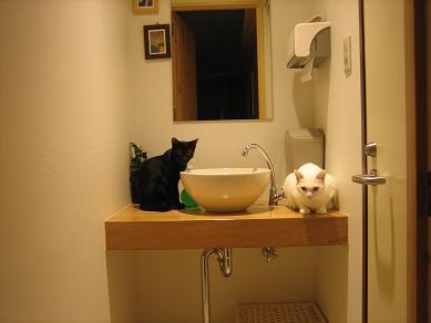 洗面所好き